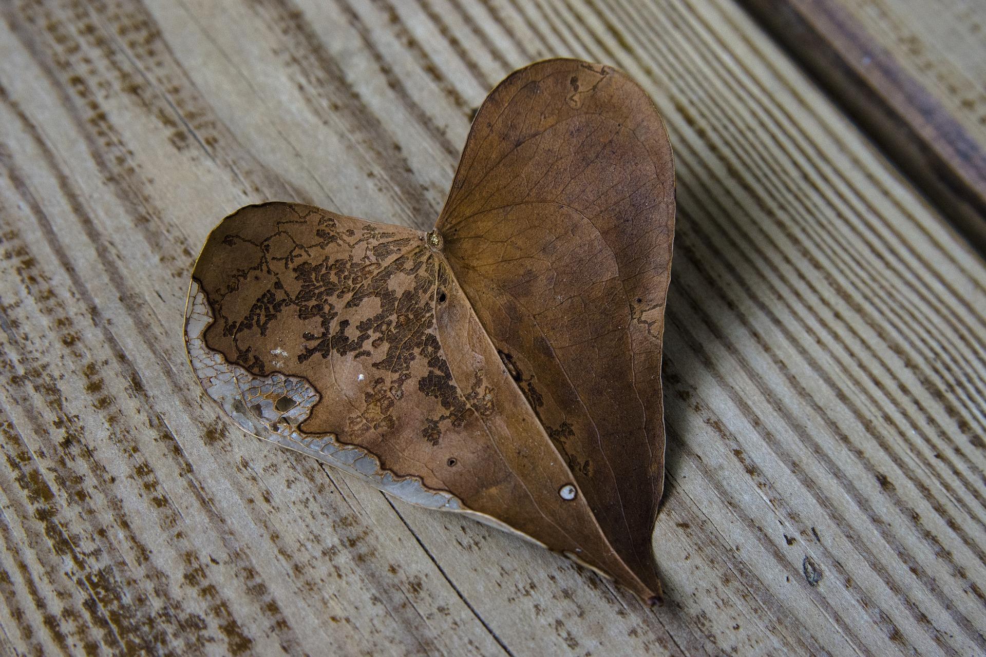 ハート形の葉っぱ