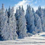 【大雪時の備蓄品】について。家族との連携も大きなポイント。